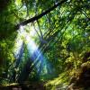 वन हैं तो जीवन है