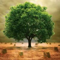 वृक्षों का क़त्लेआम