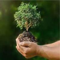 वन सम्पदा को बचाईये