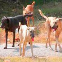 जायदाद के वारिस कुत्ते